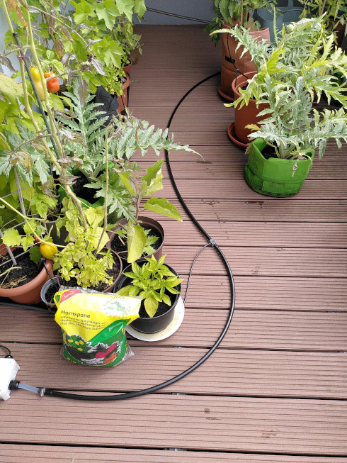 Watering system 13 mm pipe distributing water to the plants